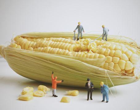 Engenharia de alimentos pra quê ?