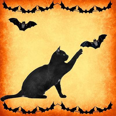 cats & bats.jpg
