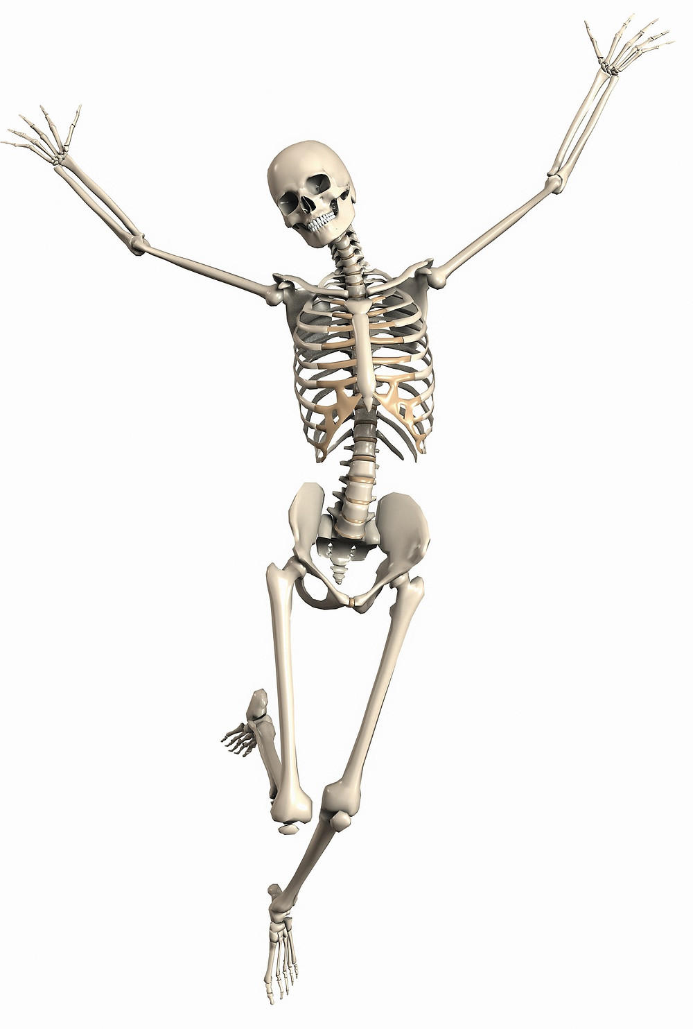 Healthy skeleton, bone health.