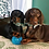 Thumbnail: Personalised Pet Portrait A3 - 2 pets
