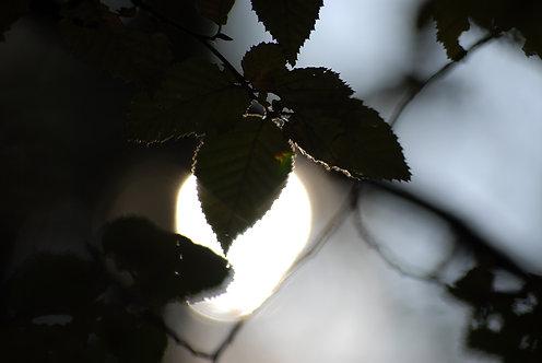Sunlight 1 40x60 cm
