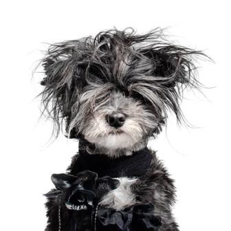 Rock n Dog (Buzzfeed)