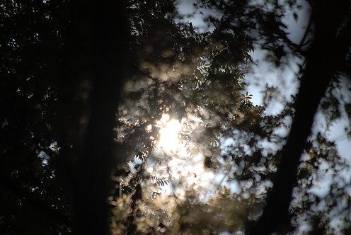 Sunlight 2 40x60 cm