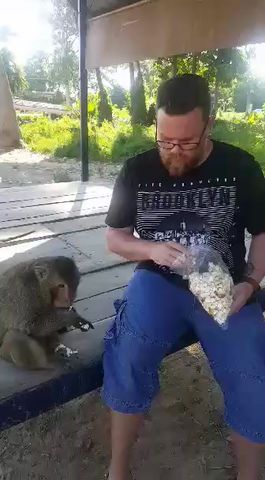 My Brush with a Popcorn-obsessed Monkey and Rabies