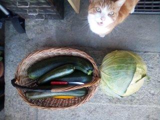 Fred hilft im Garten
