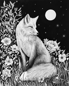 Living Fox, Charcoal and graphite. 2020