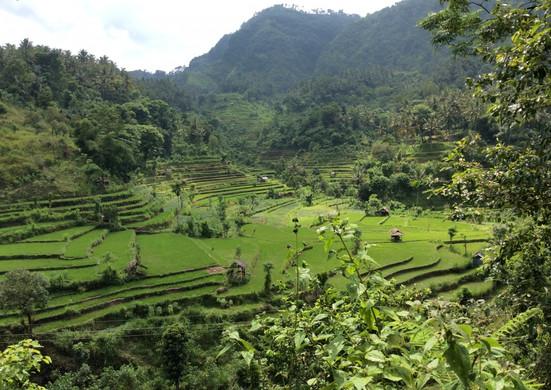 Terraced Rice Fields.jpg