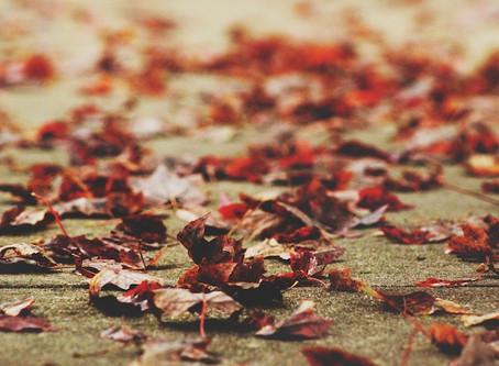 Ep. 2.3: Grounding into Fall