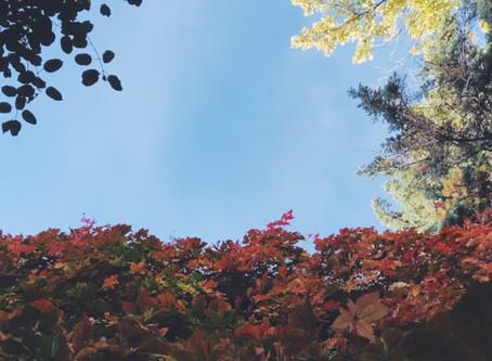 Ep. 4: Rituals for Autumn