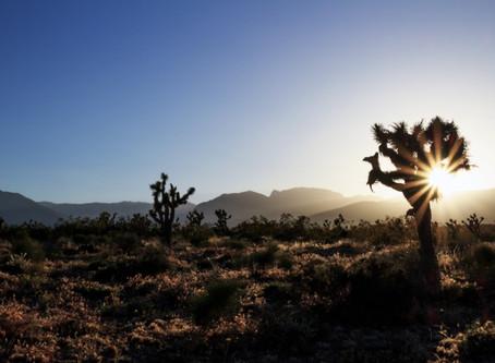Ep. 23: Healing with the Joshua Trees