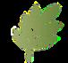 Sageologie Leaf.png