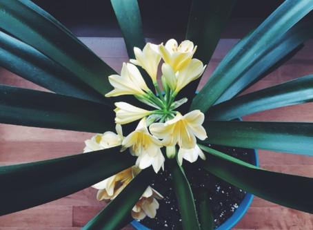 Simple Spring Rituals