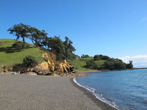 Pohutkawa trees on the coast