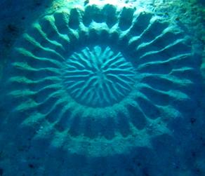 海底のミステリーサークル