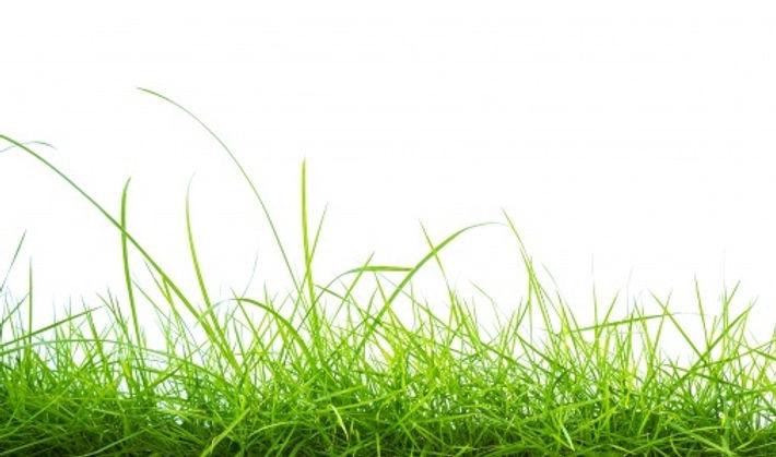 herbe-verte-fond-blanc_1232-855.jpg