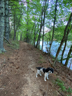 Dog on Lake Shore Trail at Pipestem Resort State Park