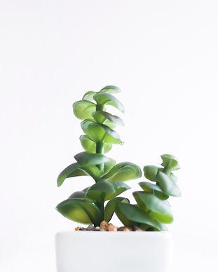 bright-cactus-close-up-912396.jpg