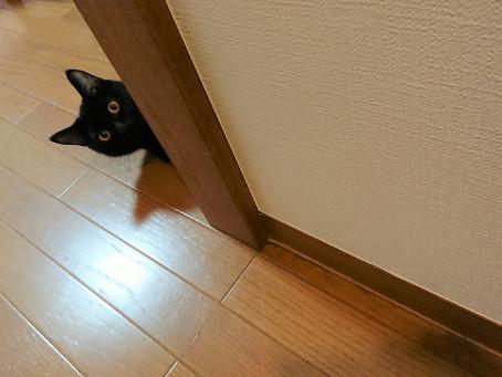 くつろぎ画像 黒猫マルコ