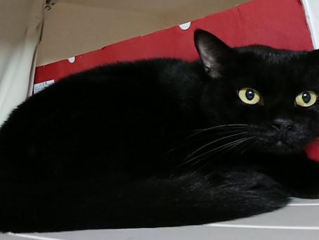 ソフィア(黒猫♀)の誕生日