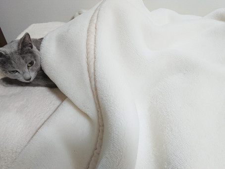 猫も毛布にもぐりたい<雑談>