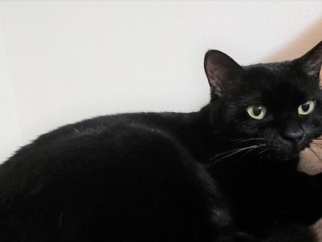 考え事をしていると寄ってくる黒猫