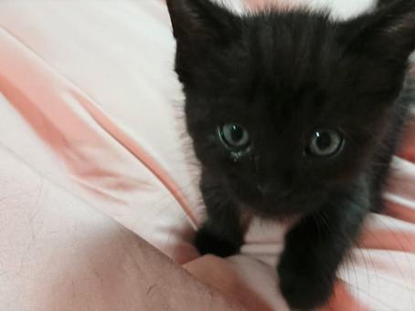 黒猫マルコが仲間入りしました。