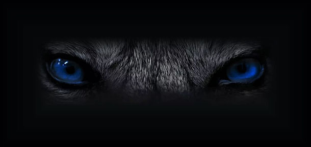 Eyes of a Wolf,Company image of Blue Wolf Inc.