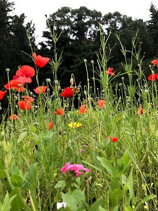 Kripalu Flowers