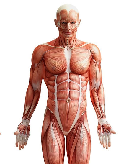 The Injury Hub, sports therapy and massage hand help you manage your injuries and rehabilitation
