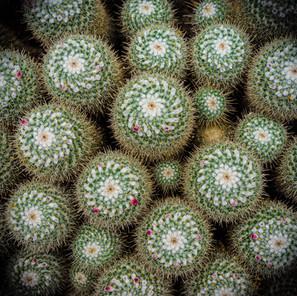 gregor-scheurer_cactus.jpg