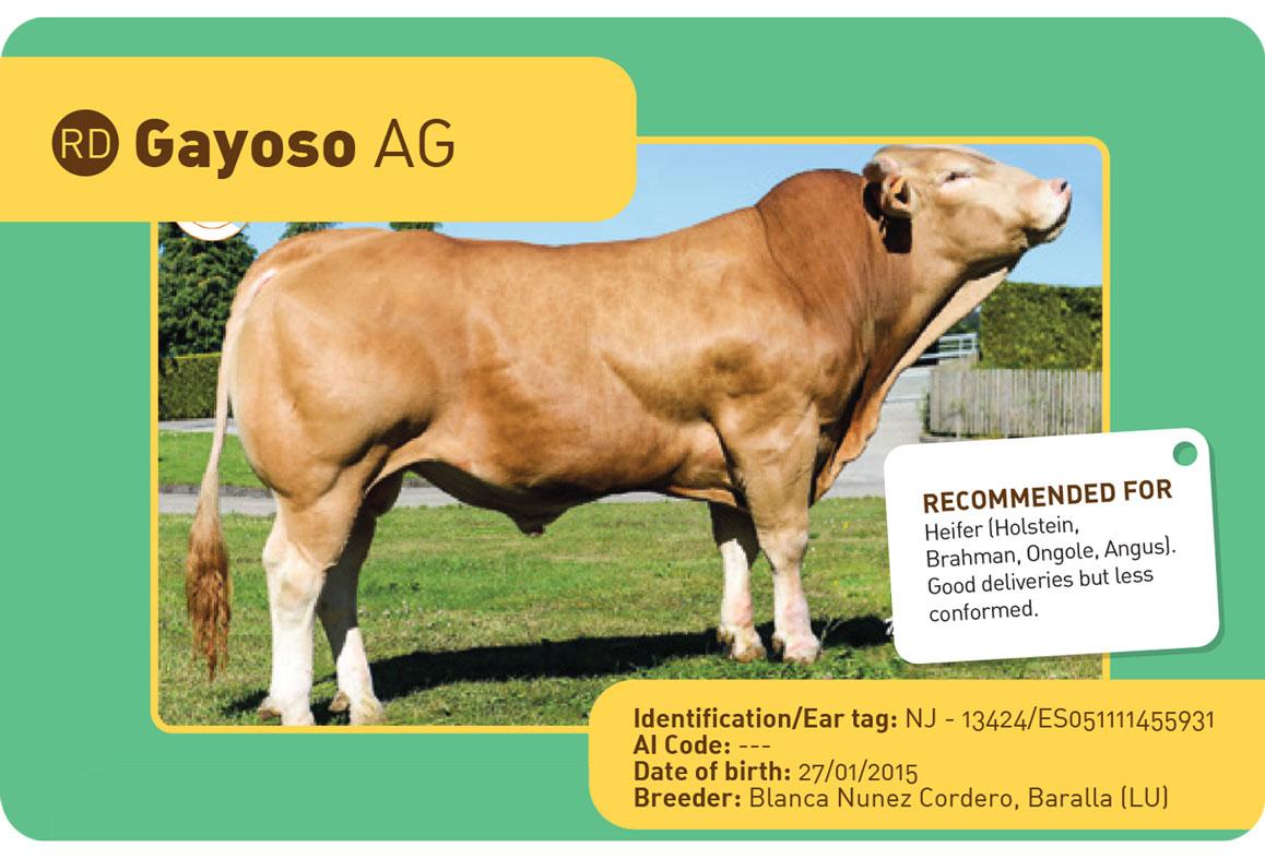 GAYOSO-AG sapi spanyol
