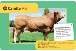 CAMILO-AG sapi spanyol