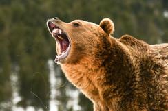 Deer/Bear Repellent
