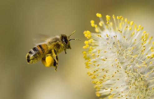 Bee Repellant