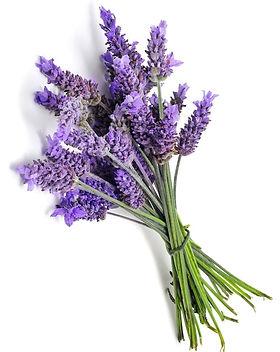 Lavender1_edited.jpg