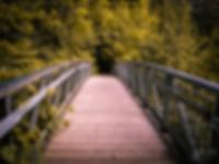 Forest_Bridge_Comp.png