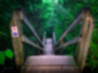 Forest_Stairs_Compressed.png