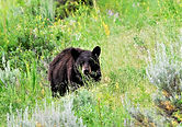 Summer and Fall Activities in Cooke City, Yellowstone