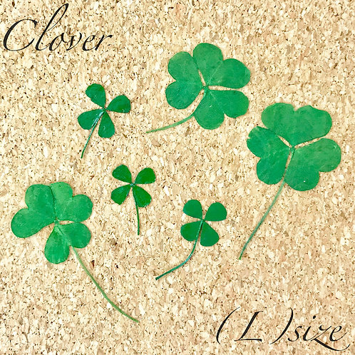 Dry Leaf Clover 2-2 (L)