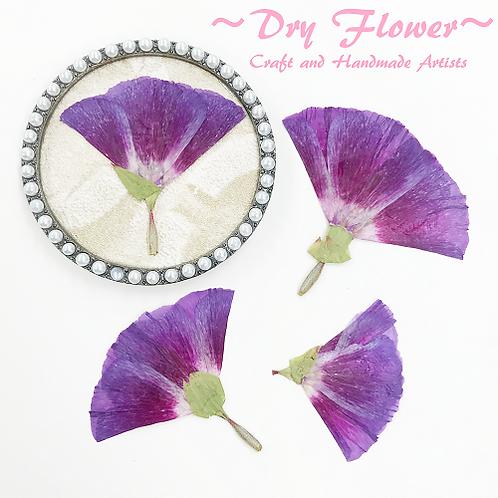 Dry Flower 1-1 (poppy)