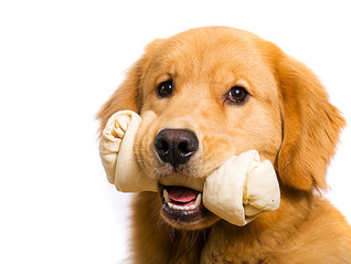 Why Three Dog Bakery Rawhides are the best choice.