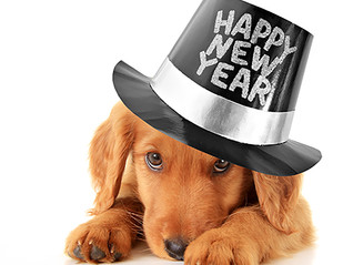 5 NEW YEAR resolutions for you and your dog.