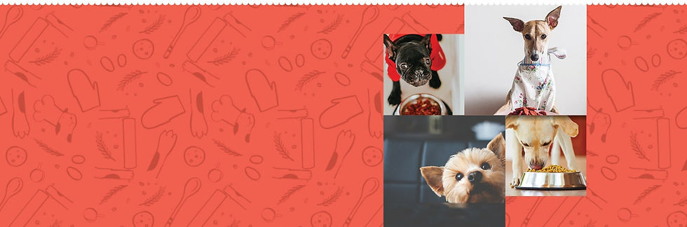 Dog Food Page Banner-min.jpg