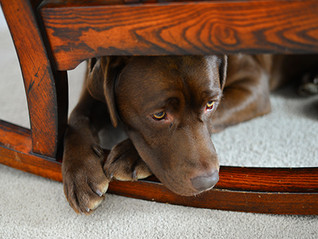 Boredom Busters for Your Dog