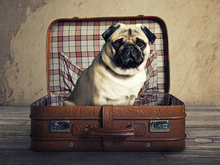 Holiday traveling tips with your dog