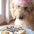 Round Cake Large.jpg