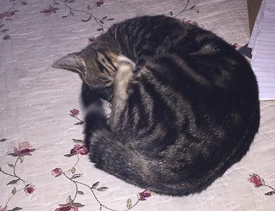 #CatNap #CatCurl
