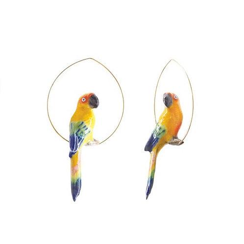 Nach Orange Parrots