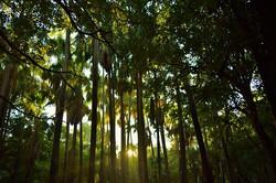 dense-palm-tree-rainforest