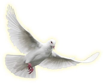 dove_torah_left.png